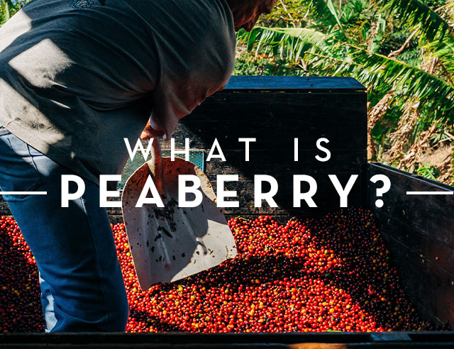 What is a Peaberry
