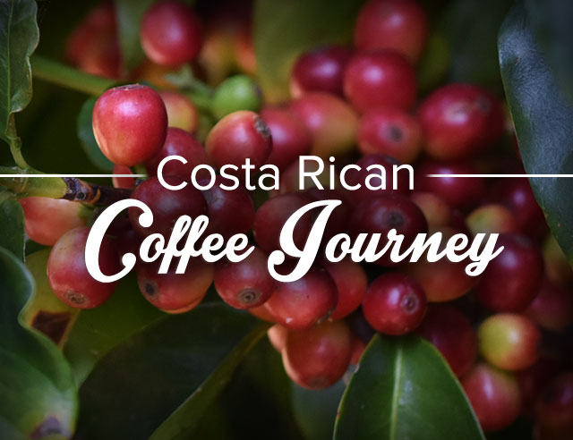 Costa Rican Coffee Journey