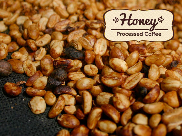 Honey Processed Coffee: What makes it so special?