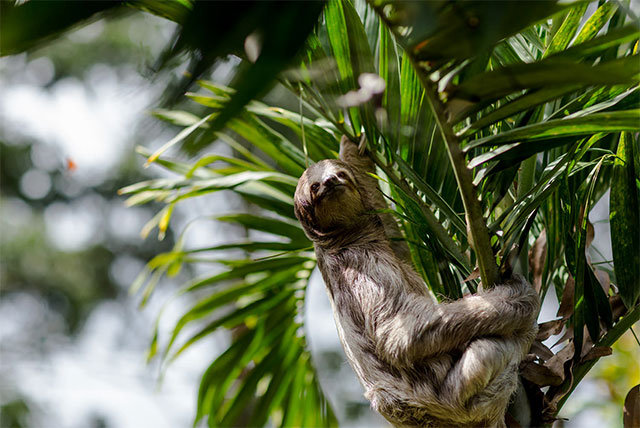 sloth update